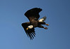 Lake Texoma Bald Eagles 2005-2007 :